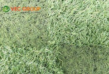 Sử dụng cỏ nhân tạo thanh lý trong những trường hợp nào?