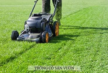Hướng dẫn cách trồng cỏ sân vườn từ A-Z